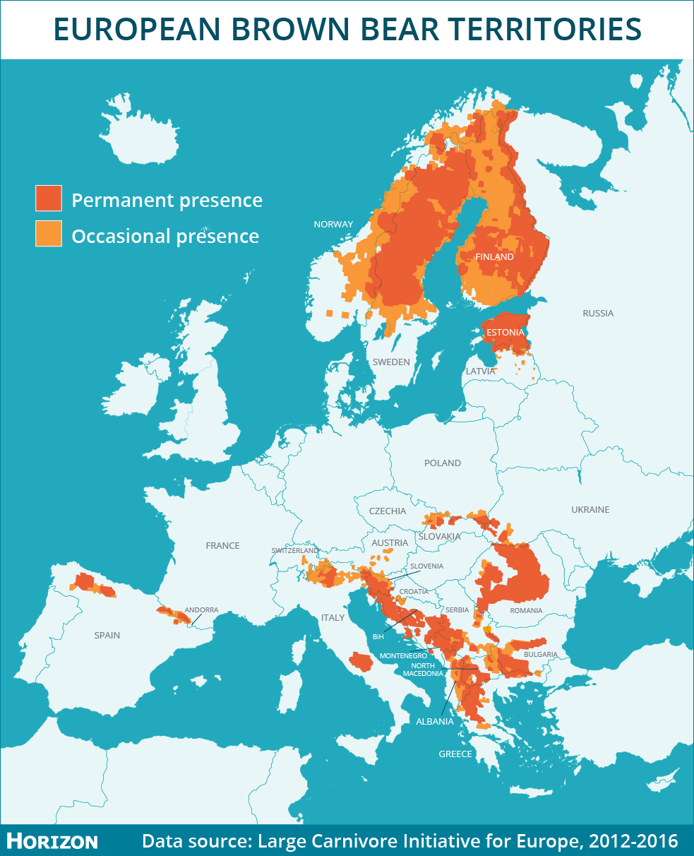 There are more than 17,000 bears living in Europe, according to the IUCN's Large Carnivore Initiative for Europe, 44% of which live in the Carpathian mountains, which span Romania, Poland, Slovakia and Serbia. Image credit - Horizon