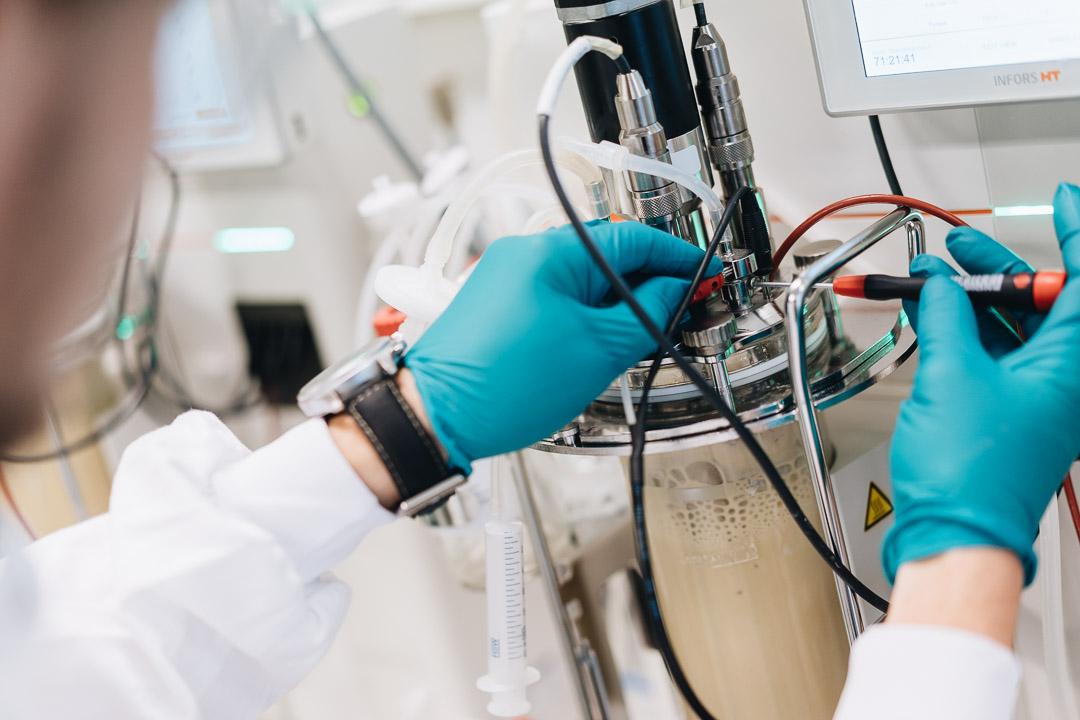 Scientists at BioPhero are scaling up pheromone manufacturing through yeast fermentation. Image credit - BioPhero