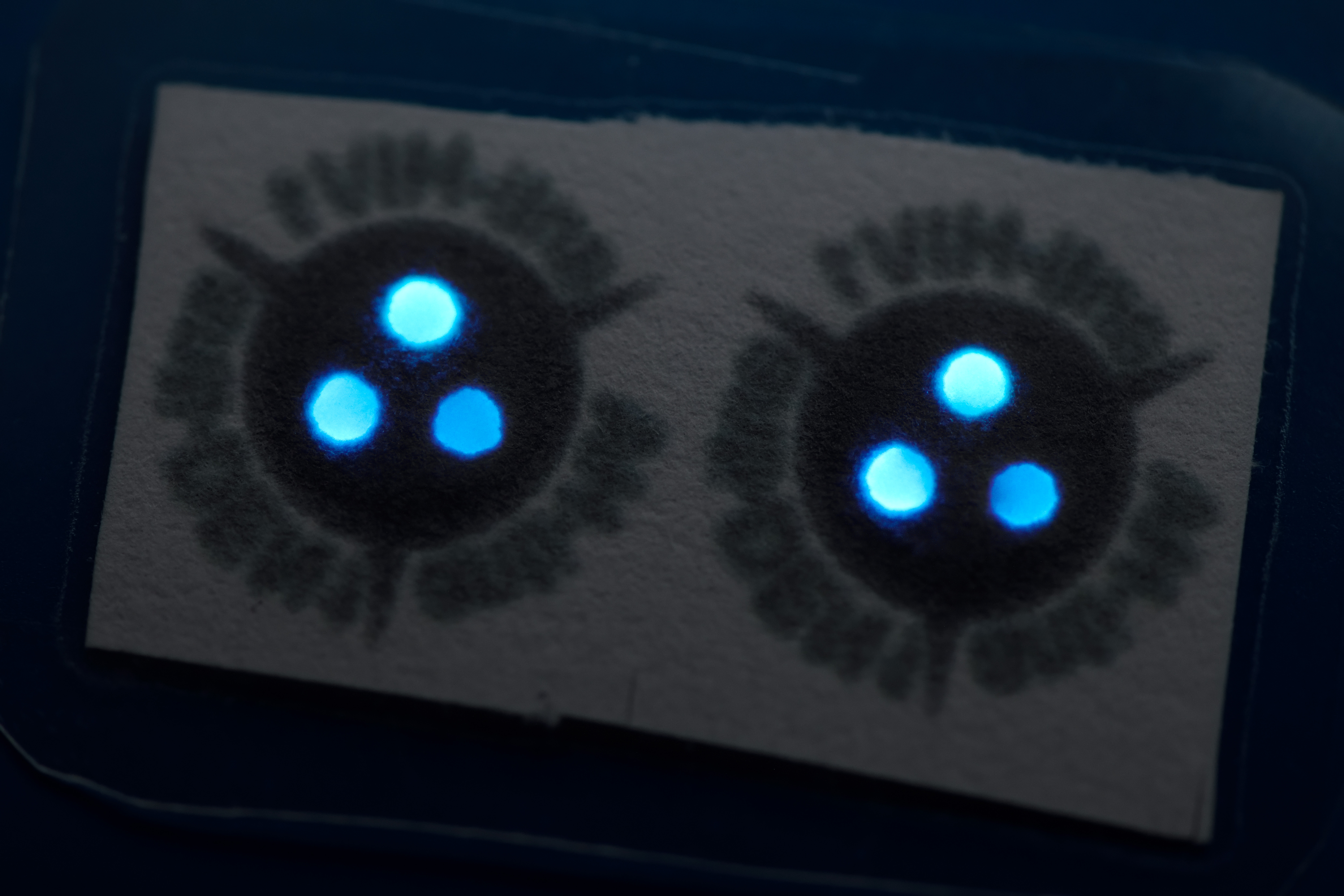 These antibody kits use luciferase, an enzyme used by fireflies to produce their glow, to emit blue light to indicate if an infection is being fought. Image credit - Bart van Overbeeke