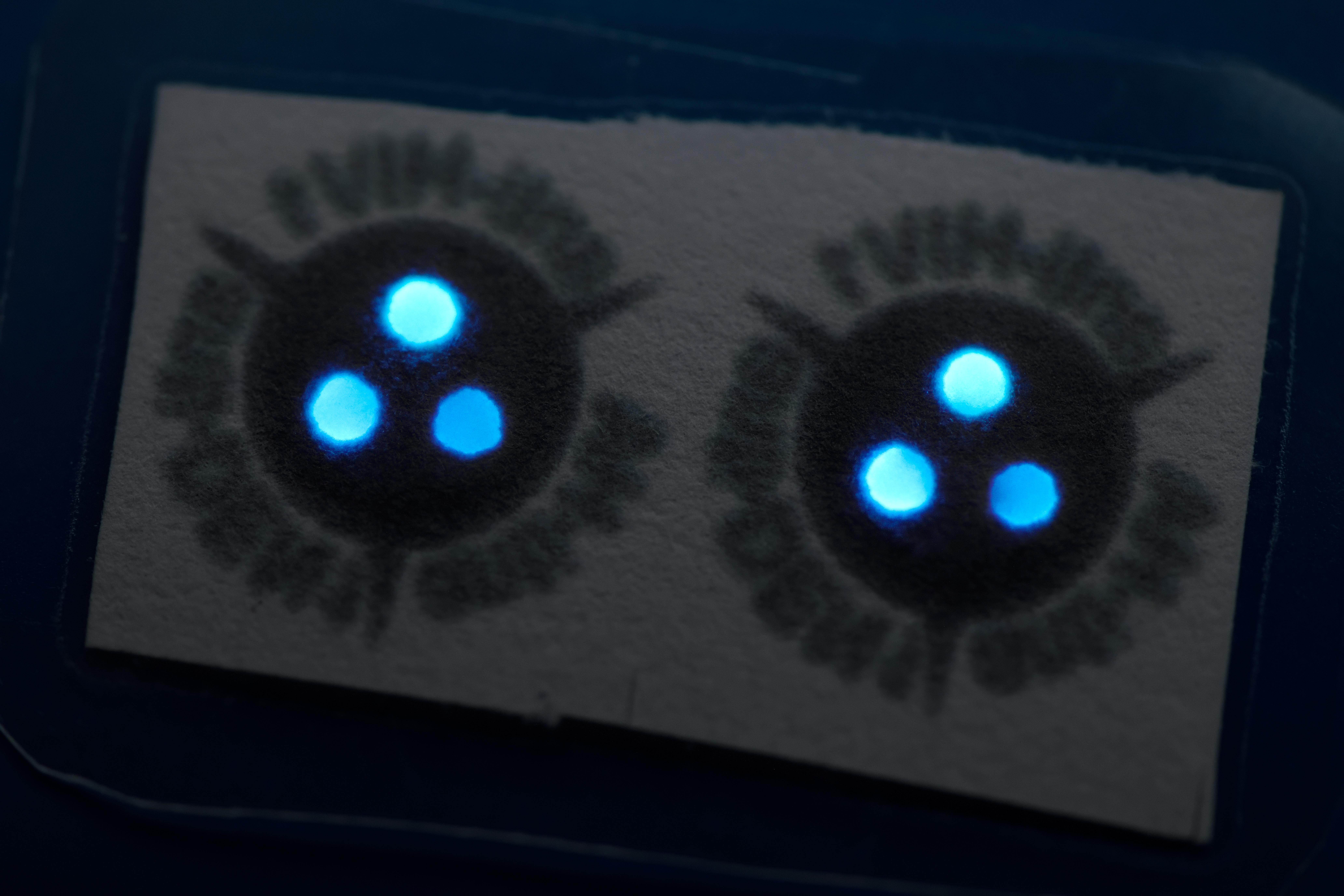 这些抗体试剂盒使用萤光素酶(萤火虫用来产生萤光的一种酶)发出蓝光,以指示是否正在感染。  图片来源-Bart van Overbeeke