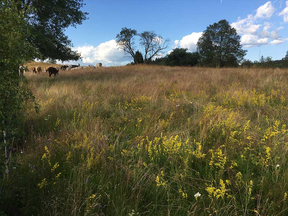 Europe's fragmented grasslands are as diverse as rainforests, says Prof. Yann Clough, an ecologist at Sweden's Lund University. Image credit - Yann Clough