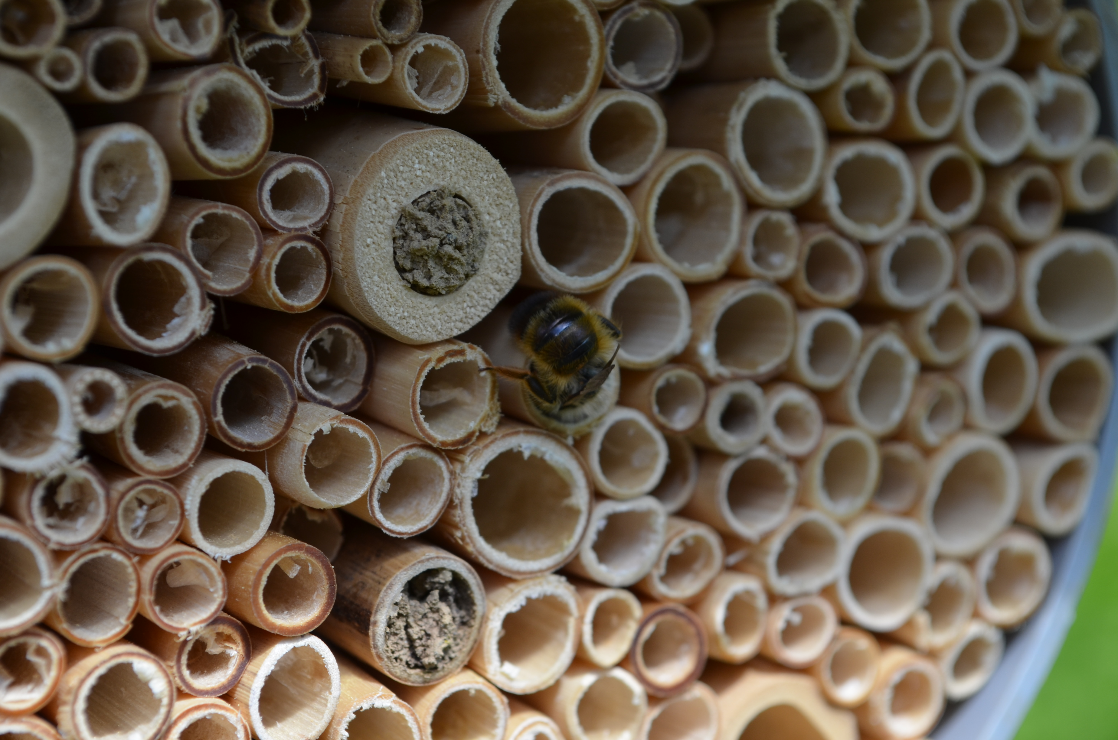 Bee hotels are helping the Bioveins researchers better understand bee and wasp populations in cities, which could help guide conservation efforts. Image credit - Sofia Mangili