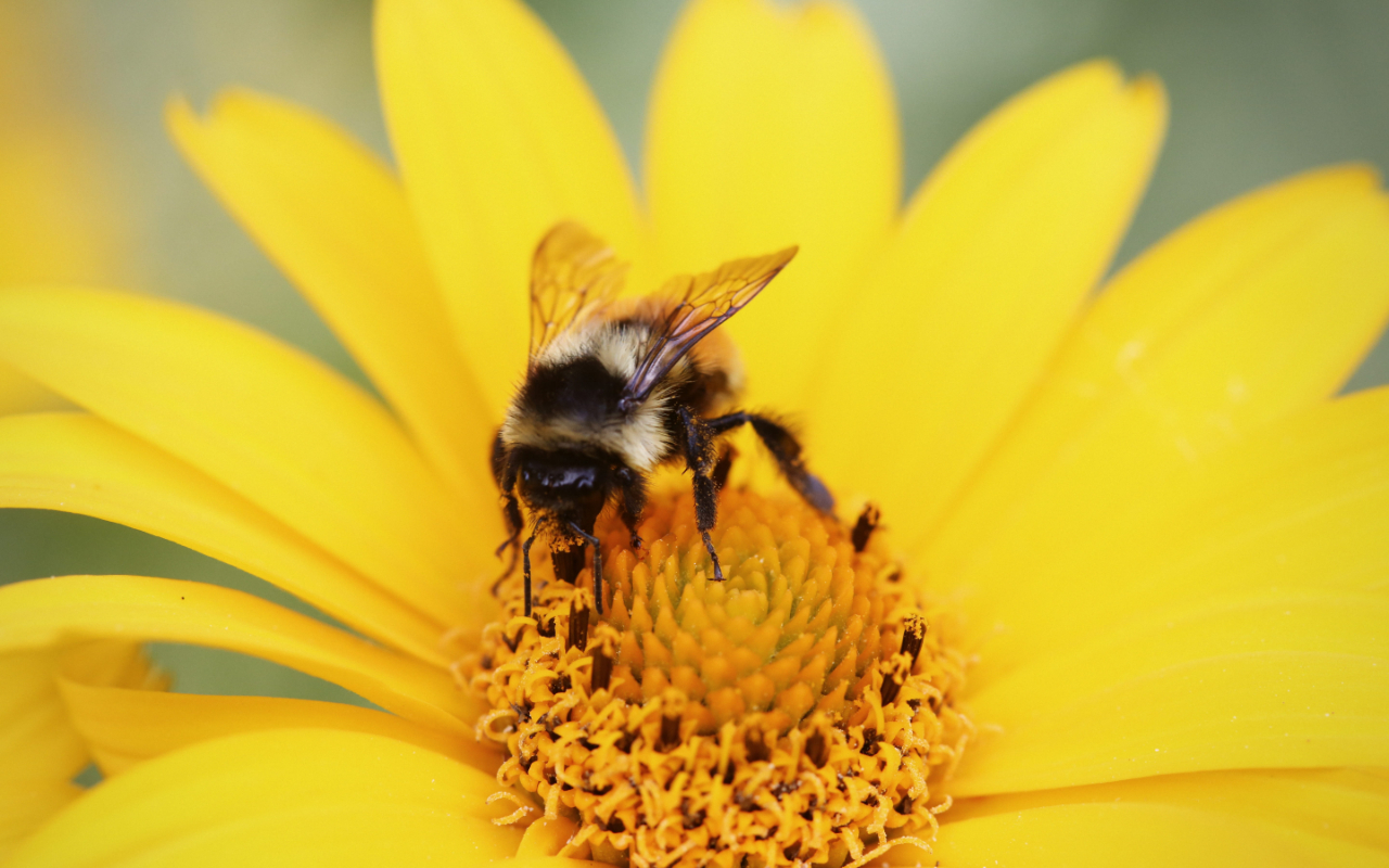 Bees develop a positive electric charge as they fly, which helps them to collect pollen from negatively charged flowers. Image credit - Pxfuel.com/DMCA