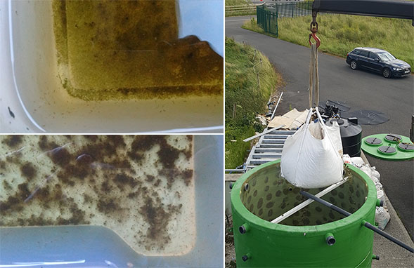 Water-flea-based filters (left) could be combined with earthworm-based systems (right) to treat wastewater. Image credit - INNOQUA