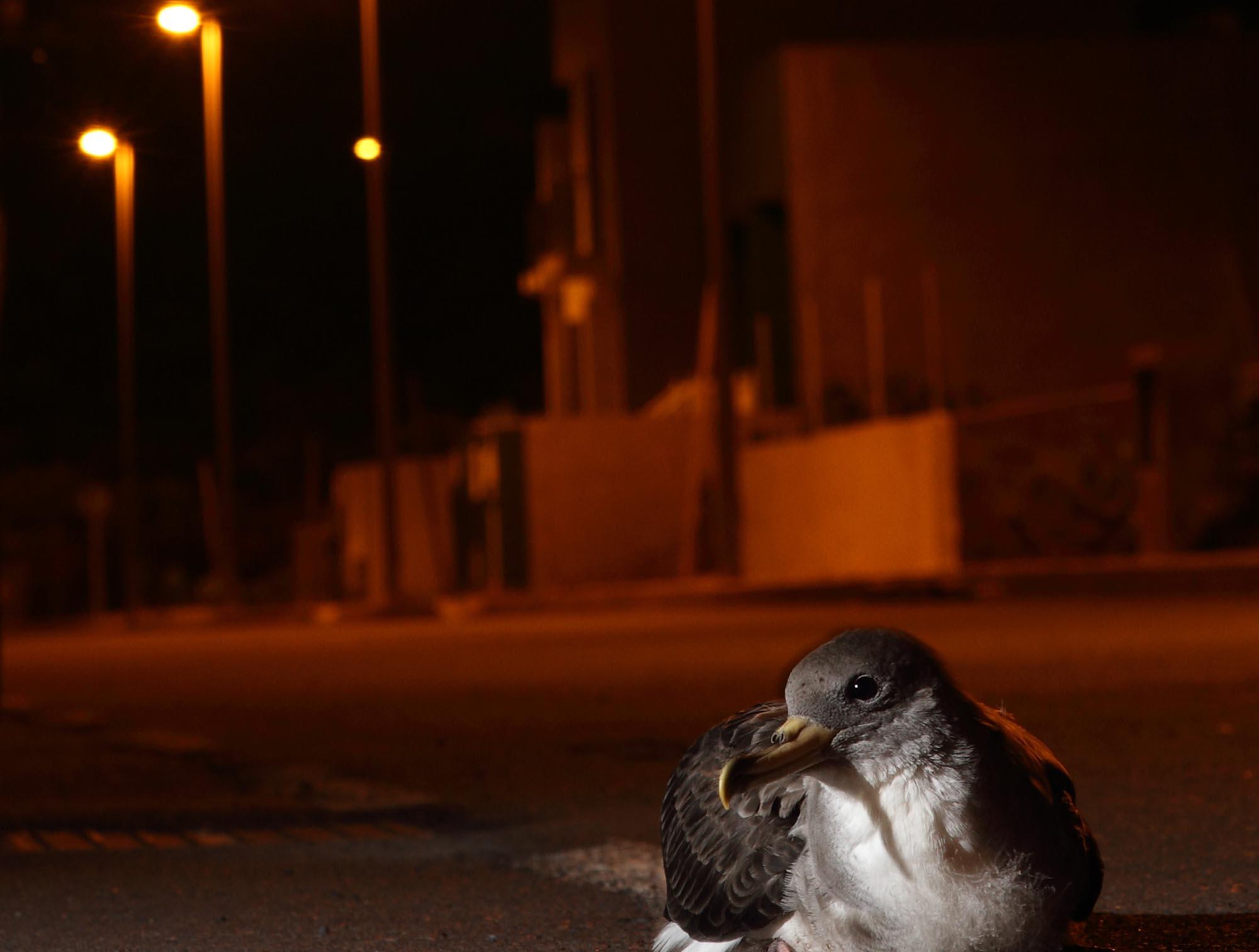 Contaminación lumínica y acústica afecta a la vida silvestre.