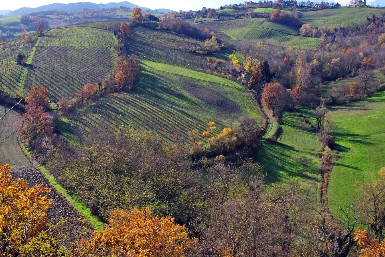 Ancient farming techniques could help mitigate climate change