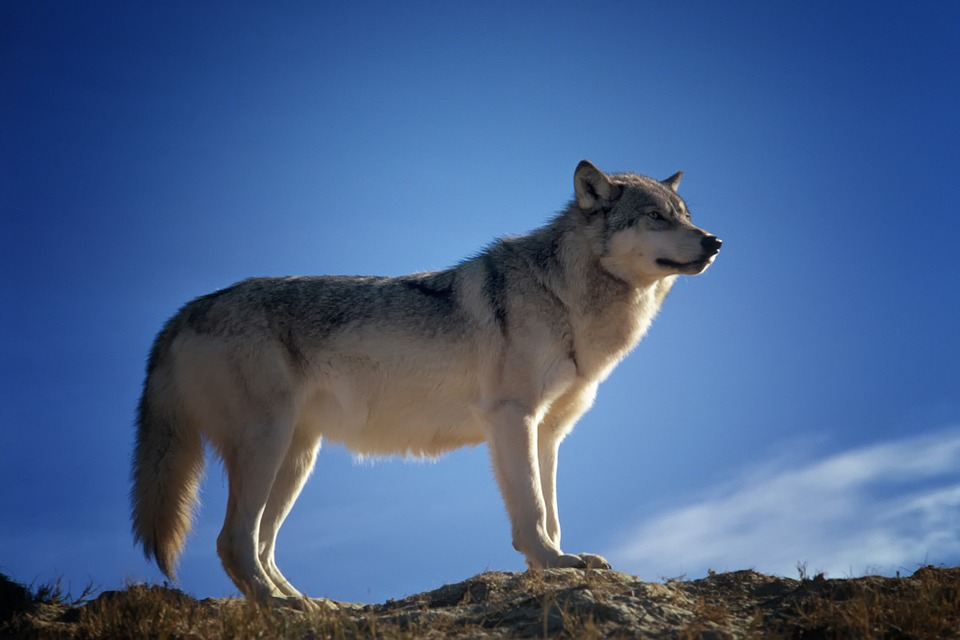 Postnummer Karta Skane.Dna Gives Insight Into Prehistoric Bonds Between Dogs And Humans