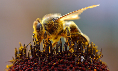 Pollination is just one service that our ecosystems provide and which could be under threat as the number of species decline. Image credit - Jon Sullivan, image is in the public domain