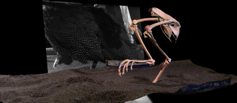 The TRACKEVOL project is using X-ray techniques to model the footsteps of birds in 3D. Image courtesy of TRACKEVOL