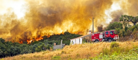 Large areas of forest and bushland in central and northern Portugal have been affected by wildfires in recent years, with high summer temperatures and strong winds fuelling the flames. © Shutterstock/devy