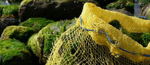 Collection of seaweed along the west coast of Ireland (Co. Donegal). ©AlgAran