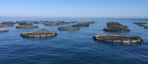 Aquaculture and fish farms must adapt to the changing sea conditions of climate change. Image credit - Ferit Rad from  Mersin University