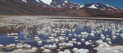 Bacteria survive in the harsh conditions of the Andean lakes of Argentina among high concentrations of arsenic. Image credit – ASLIFE project