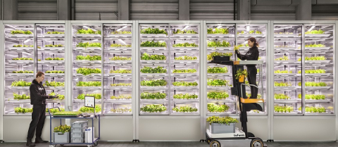 LED-vertical-farm-hydroponics