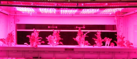 Growing healthy, nutrient-rich plants in space is essential to provide fresh food to astronauts. Image credit: Thales Alenia Space/Stefano D'Amadio