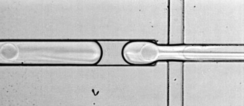 A process called droplet microfluidics isolates thousands of cells in microscopic water droplets allowing up-close analysis of genetic material. Image credit - Dr Linas Mazutis