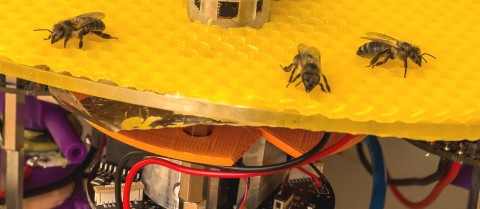 Researchers are studying bees to make robotic versions that can help beekeepers look after their hives. Image courtesy of ASSISIbf
