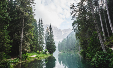 A better understanding of nature's economic, environmental and sociocultural benefits could help protect species. Image credit - Luca Bravo/ Unsplash