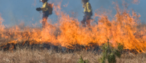 With the EUPHEME project, Prof. Stott is linking extreme heatwaves and resulting wildfires to climate change. Image credit - Pixabay/stevebp, licensed under CC0