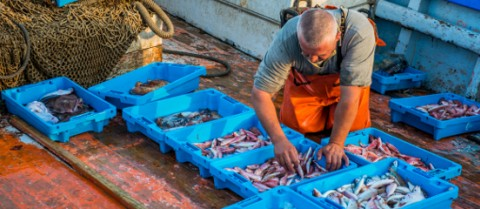 Fishermen in Palamós, Spain are becoming more involved in sustainability issues, like determining if red shrimp stock is healthy. Credit: Ainhoa Goma