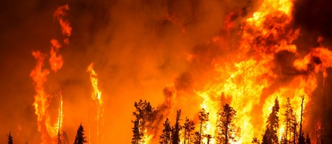 More than 700,000 hectares of land in the EU were destroyed by forest fires between January and September 2017. Image credit – CC0 Public Domain