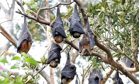 Based on size alone, bats should live around four years but in fact they can reach the age of 40. Image credit - https://www.pikist.com/licenced under CC0