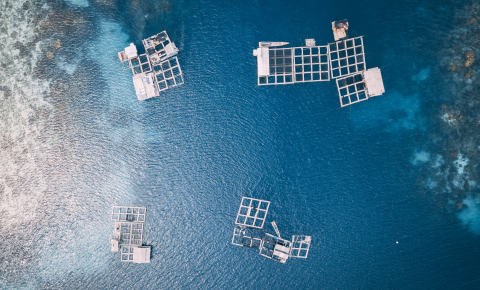 Aquaculture is one of the fastest growing food sectors worldwide. It supplies about half of the fish that people consume globally. Image credit - Hanson Lu / Unsplash