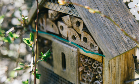 Bee and wasp hotels can tell scientists about the fitness of different populations - how many are born, how many die and how many have parasites in their nest. Image credit - Markus Winkler / Unsplash