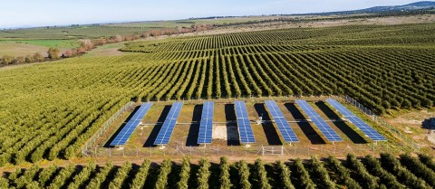 Solar-powered irrigation systems can help reduce water consumption by letting farmers know exactly how much water is needed and when. Image credit - MASLOWATEN