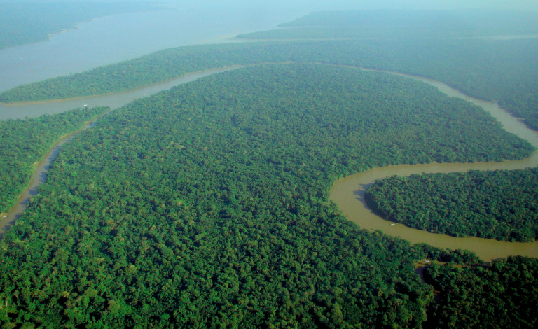 Better tracking of forest data will make the climate change reporting process easier for countries who want compensation for protecting their carbon stock. Image credit - lubasi, licensed under CC BY-SA 2.0