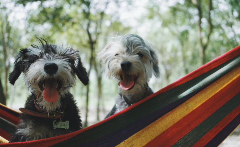 Living with people means that dogs and humans experience similar social and environmental influences on a daily basis. Image credit - Alvan Nee/Unsplash