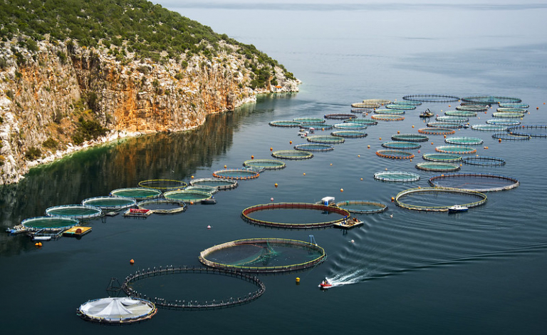 The number of fish parasites is rising with climate change and as fish farming becomes more common, say researchers. Image credit - Flickr/Artur Rydzewski, licensed under CC BY 2.0