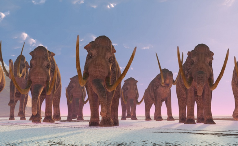 The tumultuous Pleistocene climate led to numerous migration, local extinction, and replacement events. North American mammoths crossed the Bering Strait and replaced those native to Siberia, before arriving in Europe. Image: Shutterstock/ Catmando.