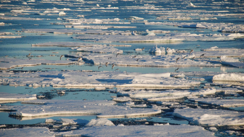 Sea ice is affected by water temperature while Greenland responds to atmospheric temperature rises. Image credit - Dr Teodóra Pados