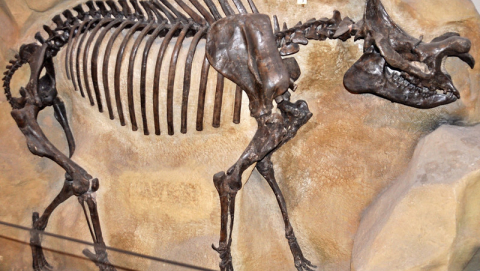 Using the fossil record to estimate the levels of biodiversity is still a challenge given that we have more fossils from the recent past and as we go back deeper in time, none have been found for entire continents. Image credit - James St. John/Flickr, licenced under CC BY 2.0