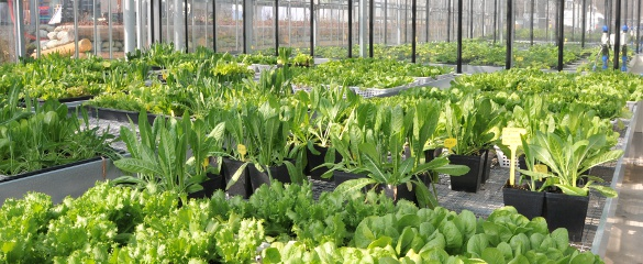 Biological toxins, viruses and bacteria pose a very real threat to our safety. Image credit: PLANTFOODSEC