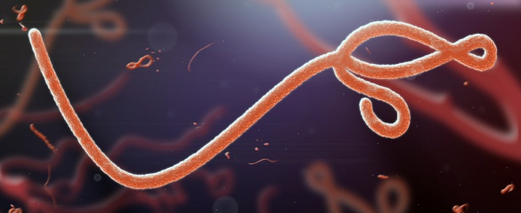 Insights into how the Ebola virus spreads within the human body will help tackle not only this disease but also others with similar characteristics. Image: Shutterstock/ jaddingt