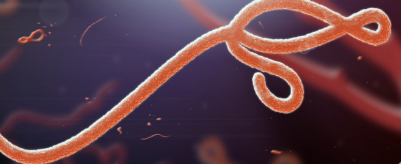 There could be an effective Ebola vaccine in 2015, said infectious diseases researcher Dr Javier Moreno. Image: Shutterstock/ jaddingt