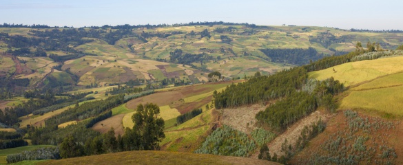 In Ethiopia, researchers identified three major challenges related to water and land use: rainfall variability, poor soil fertility and a shortage of land. Image: Shutterstock/John Wollwerth