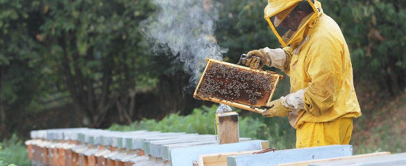 Thanks to EU-funded research, the monitoring of bees in the hive is going wireless. © Shutterstock