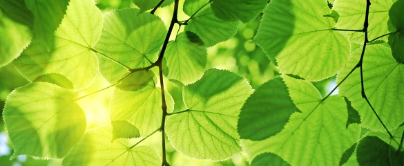 Understanding how plants use quantum mechanics in photosynthesis could contribute to the design of more efficient solar cells. Image: Shutterstock/ArTDi101