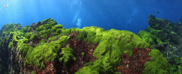 Industrial chemicals could be replaced by biomolecules made by algae plantations. Image: Shutterstock/abcphotosystem