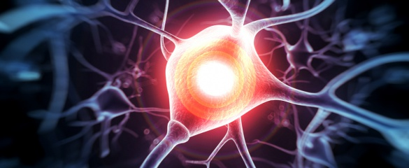 Illustration of a human human nerve cell © Shutterstock/Sebastian Kaulitzki