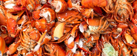 Chitin, found in lobster, shrimp and crab shells, is being turned into plastic film and containers. Image: Shutterstock/BW Folsom