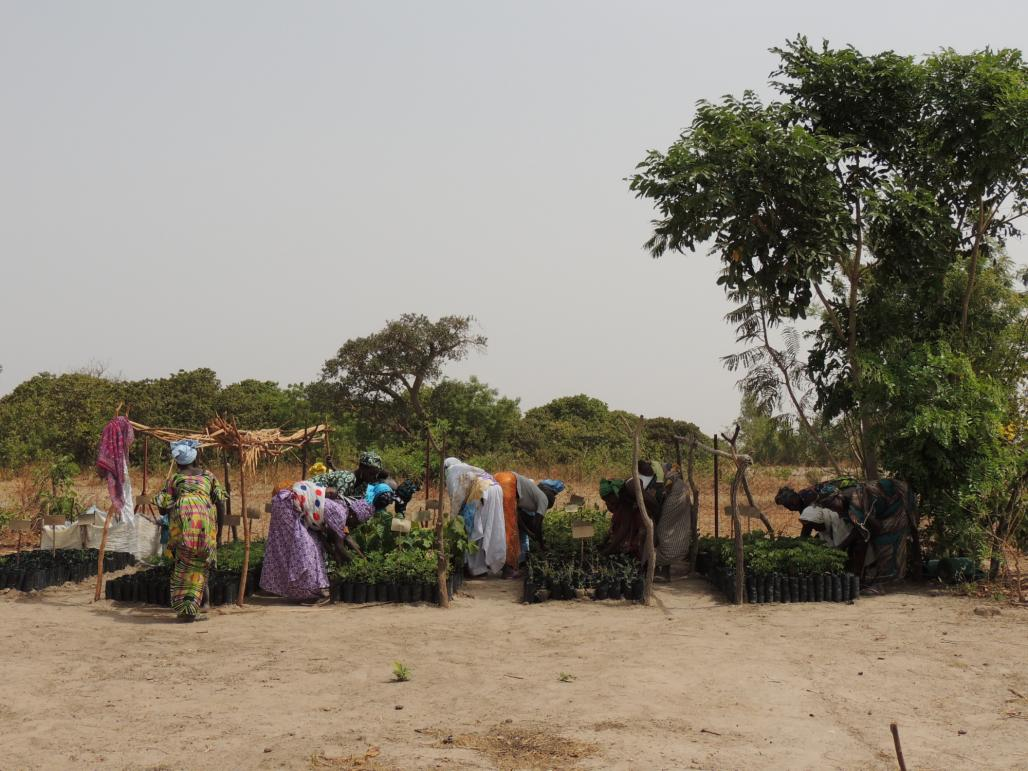 One side effect of deforestation is desertification, as is in the case in Senegal. The population of this West African country has increased more than fourfold since 1960, which means that more trees have been cut down. This, combined with climate change, has turned much of the land into desert. But the EU-funded UNDESERT project is trying to reverse this by working with communities to plant over 20 species of native trees, and since 2010 has planted 40 hectares with 5 000 trees. The project has set up a ca
