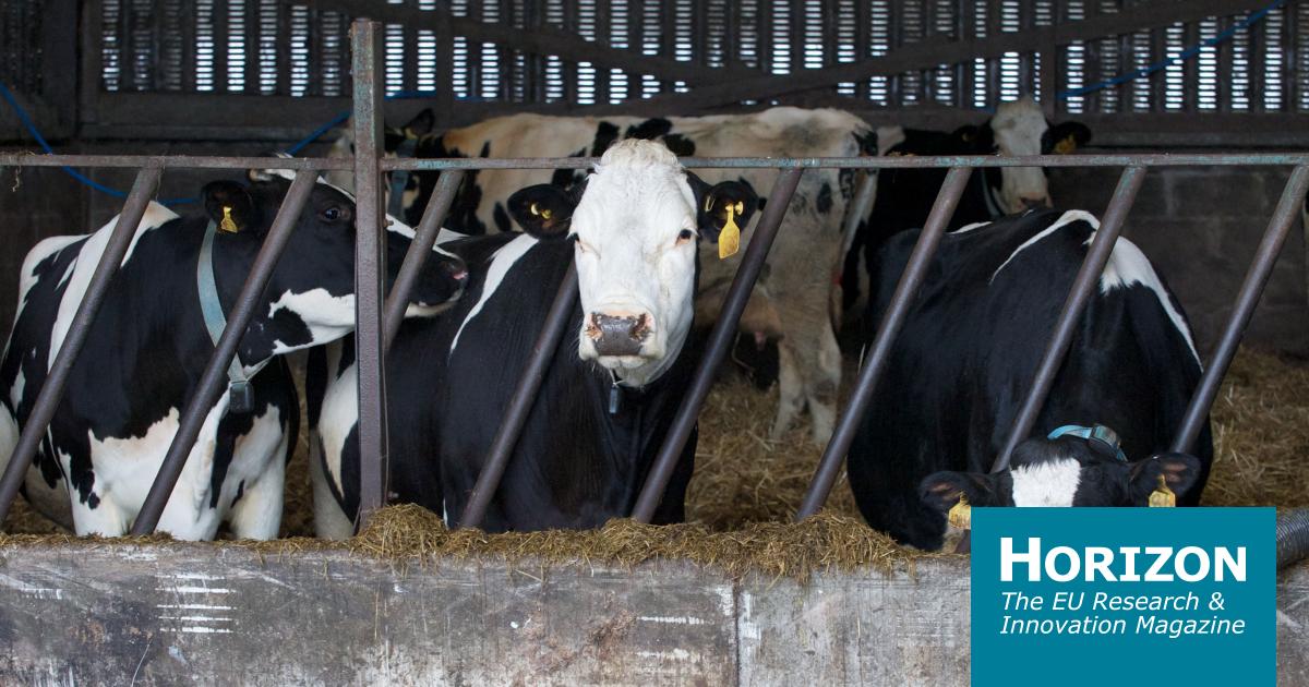 传感器如何使农业变得更聪明  | 地平线杂志